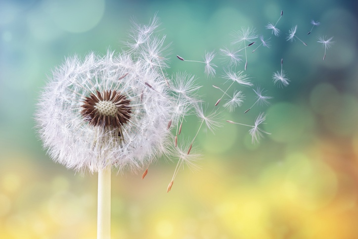 Beat your summer allergies