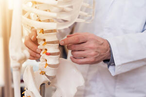 chiropractor holding a skeletal model